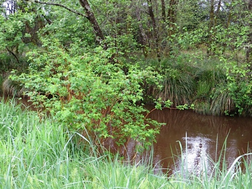 Holman Creek, along the path to the beach