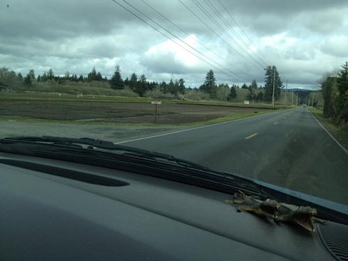 passing cranberry bogs on Pioneer Road