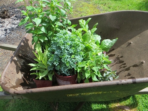 plants to go in at KBC