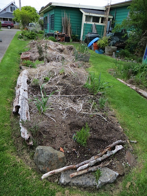 planning to make this debris pile look more like a garden