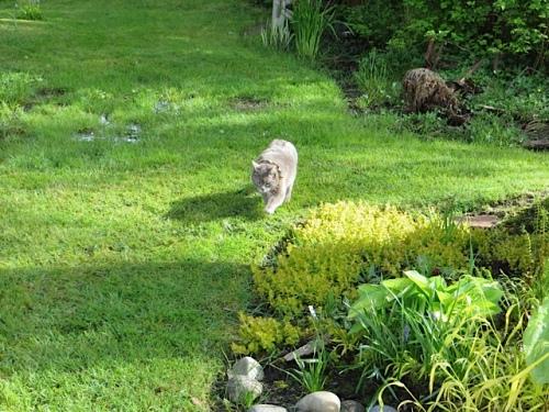 Today Smokey gardened with me.