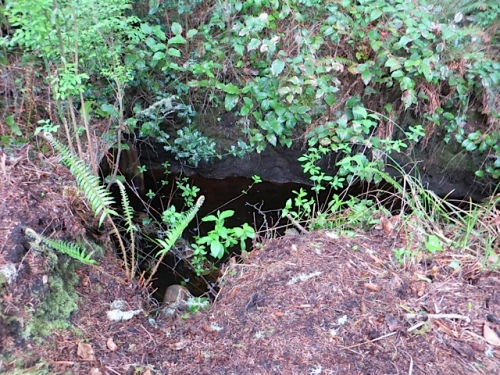 and found a dark stream that marks the southern edge of the property...