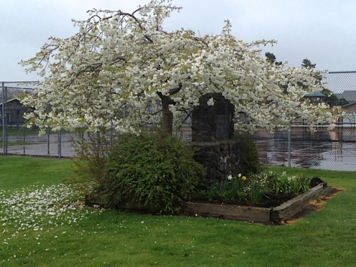 a lovely sight by the baseball field as we drove to the city works yard (and stopped to deadhead some narcissi)