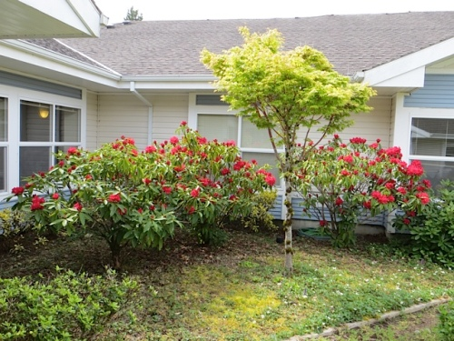 These are the ones that I stopped from being pruned too hard.
