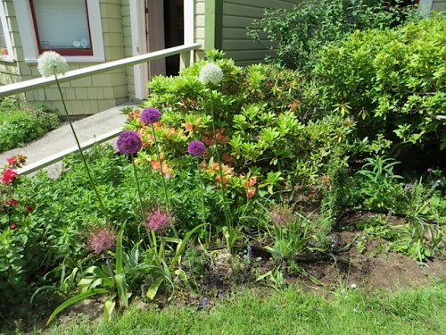 east side of entrance:  good, Alliums.  Questionable, Lysimachia.  Too much of it.