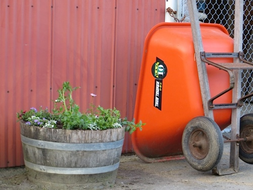 the cleaned up barrel, planted with red, yellow, and blue annuals