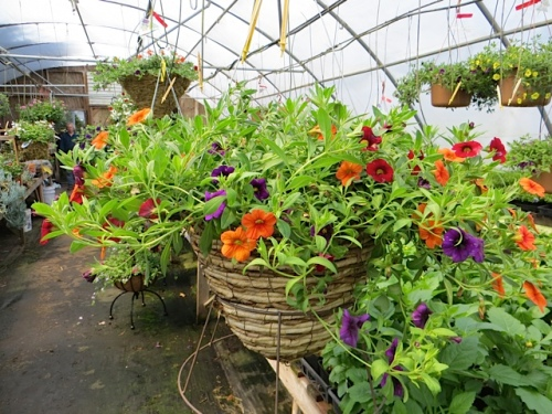 Next, The Basket Case Greenhouse for still more annuals.