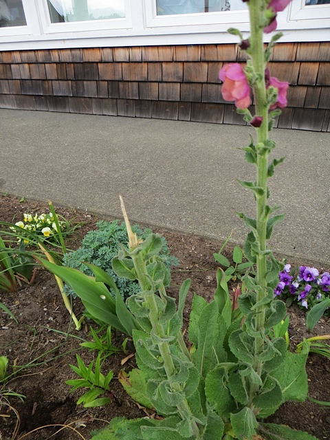 and then I saw someone had stolen two big flower spikes.