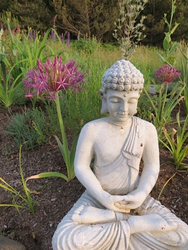 Allium christophii (albopilosum) and Buddha