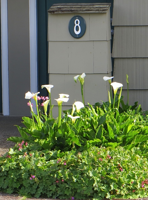 and calla lilies