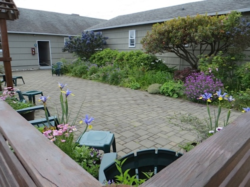 center courtyard; still did not have time to pull the scilla foliage