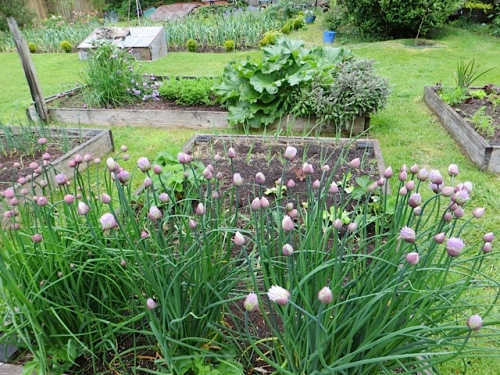 chives and veg