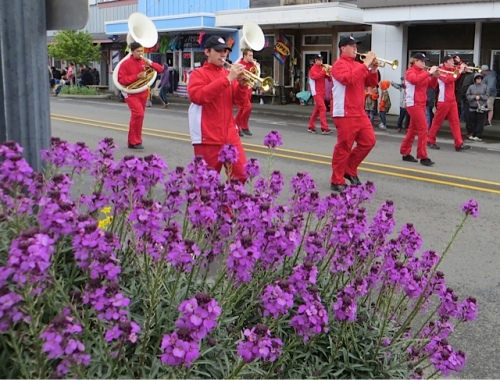Erysimum 'Bowles Mauve' and a marching band