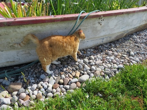 Felix accompanied me and plants to the boat garden.