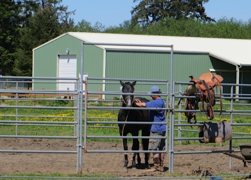 horse getting groomed
