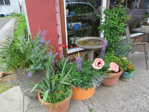 Outside, Luanne's container garden and one of the city planters