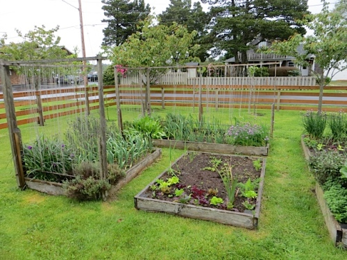 the enviable veg patch