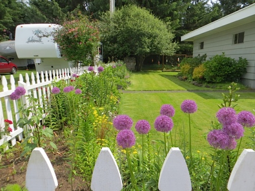 the weekly view of the picket fence garden