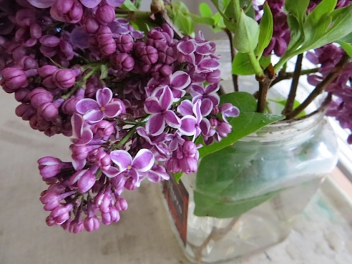 Nora's lilacs make me think that I need some lilac bushes of my own.