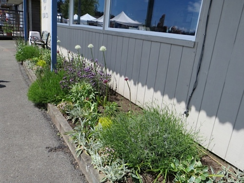 The Port Office garden; I had to check to rememeber which plant had died and left a big hole.  Lavender!