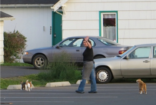 Owner Sondra leaves, with THREE parking lot cats.