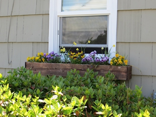 one of four window boxes