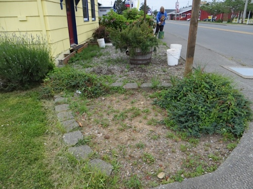 42 Street front garden; more on that little dirt patch later