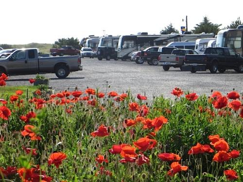 Andersen's poppy field