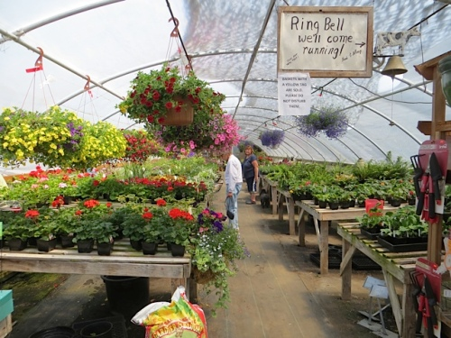 There are still loads of annuals available.