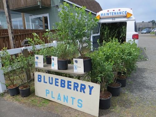 And at the blueberry display, I took my leave of Kathleen and turned toward home.