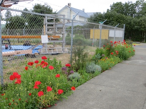 boatyard garden poppies