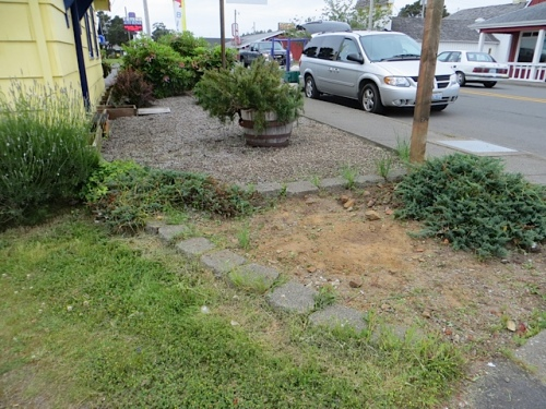 This area is just silly, with bindweed roots and dirt too nasty to grow anything good.