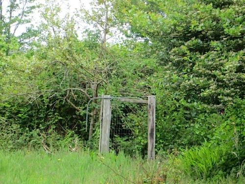 the old fenced part of the garden