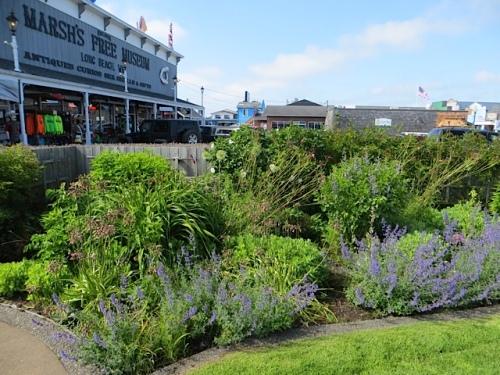 Fifth Street Park garden