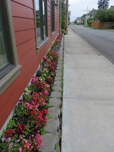 On the way, a newly planted garden of annuals at the Ilwaco Firestation on Pearl.  We occasionally weed Nelly's garden on the other side of the street (right).