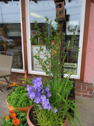 Just some of Luanne's flowers outside the café.