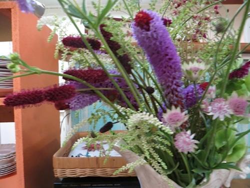 with some Primula viallii