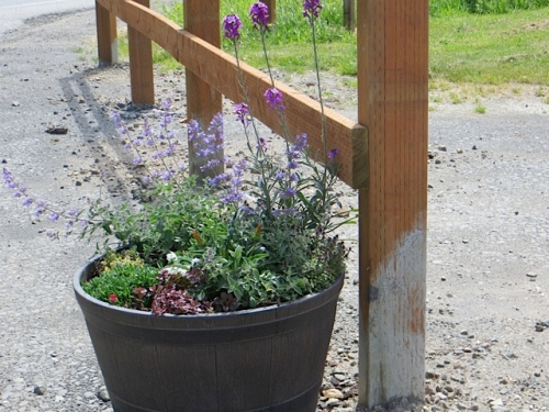 one of the new perennial planters by the entrance