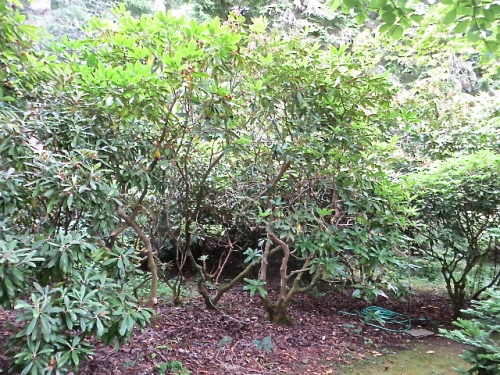 proceeding further down the gentle slope along the woodsy edge of the garden