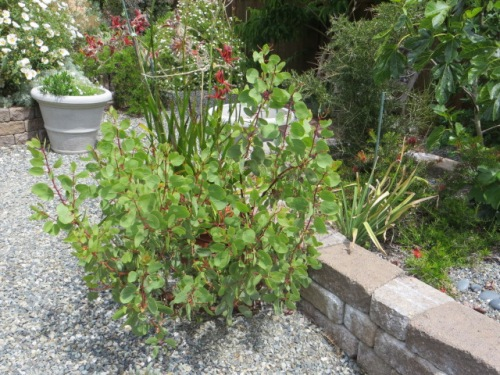 plants thriving in the warm microclimates