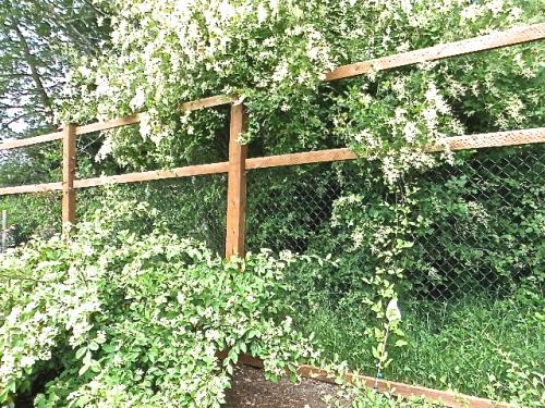 good fence