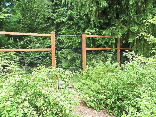 a gate to the conifer woods