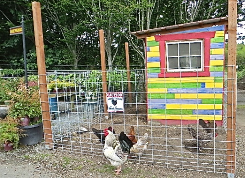 "chicken coop with ""attack rooster"" patrolling the perimeter"
