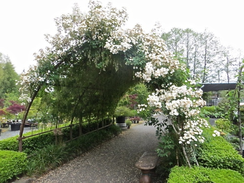 an arch of roses