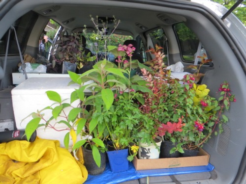 back at the Bellevue Hilton:  our van still has room for lots more plants.