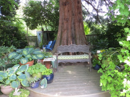another shady deck, great way to have plants under a big tree