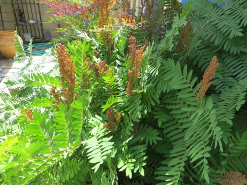 On the patio level of the garden.  Allan was very taken with this fern.