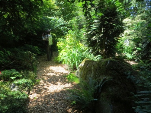 deeply shadowed woodland path
