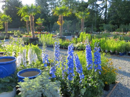 the nursery looking lovely in evening light