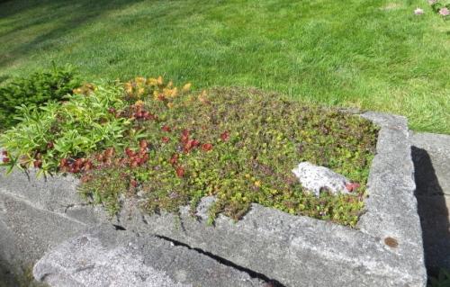 a trough garden